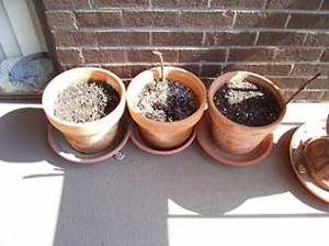 The flower pots, waiting for plants.