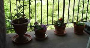 Voila! The plants, they are potted!