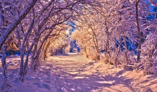 winterlane-v2
